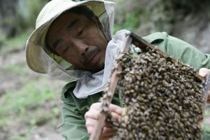 Nobility of Nature - beekeeping